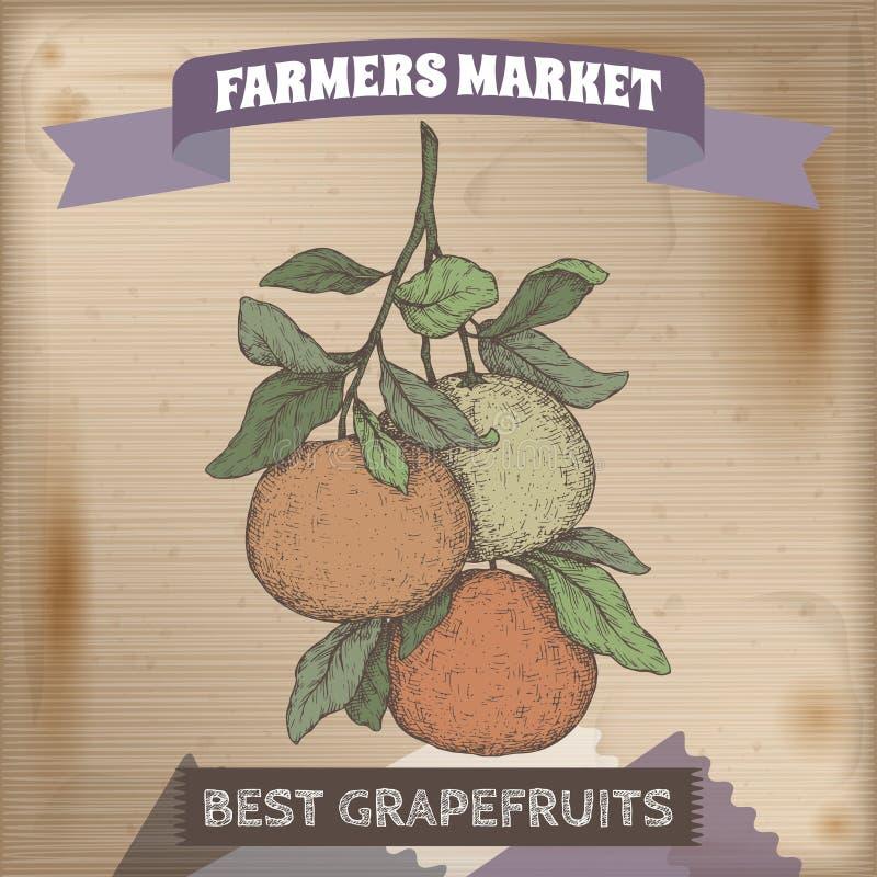 Famer与葡萄柚分支颜色剪影的市场标签在木背景 库存例证