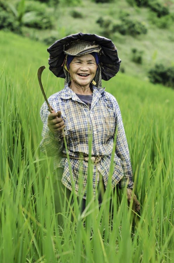 Famer en el campo del arroz imágenes de archivo libres de regalías