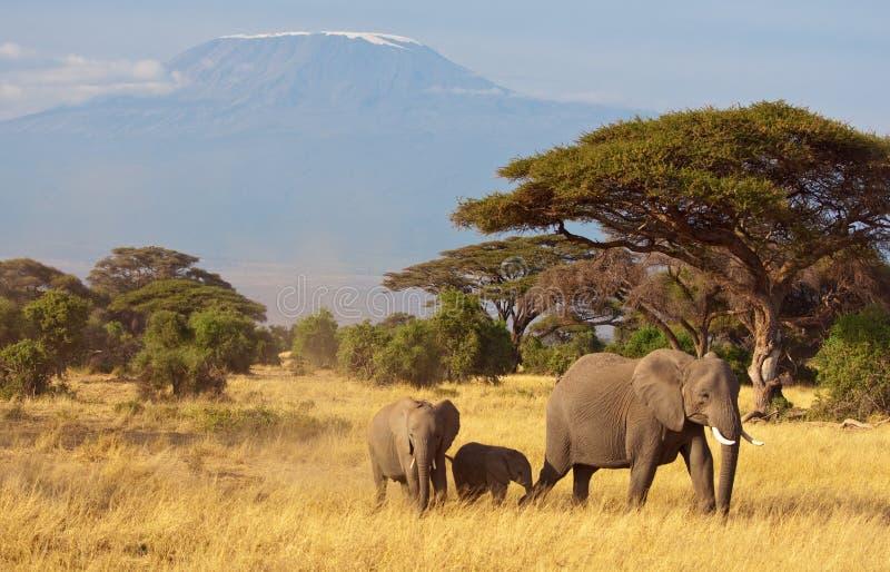 Famiglia & Kilimanjaro dell'elefante
