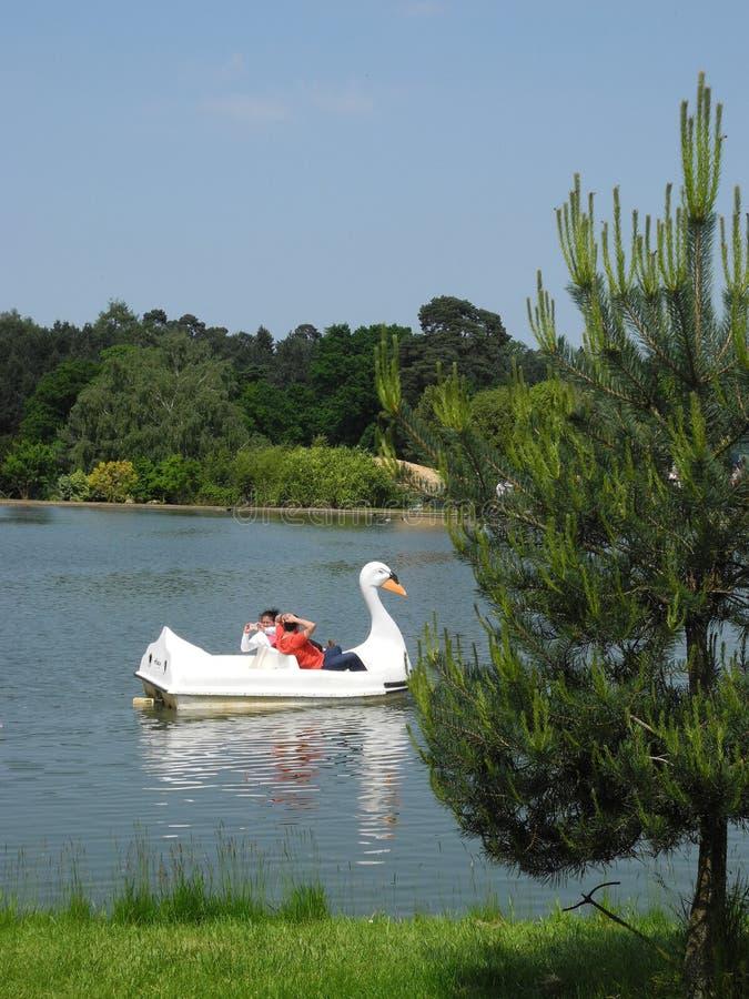 Famiglia che gode della barca del pedale del cigno a Woburn Safari Park, Regno Unito fotografie stock