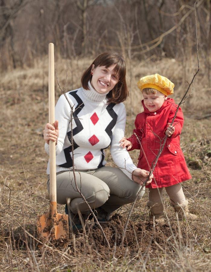 Famiglia che pianta albero immagine stock
