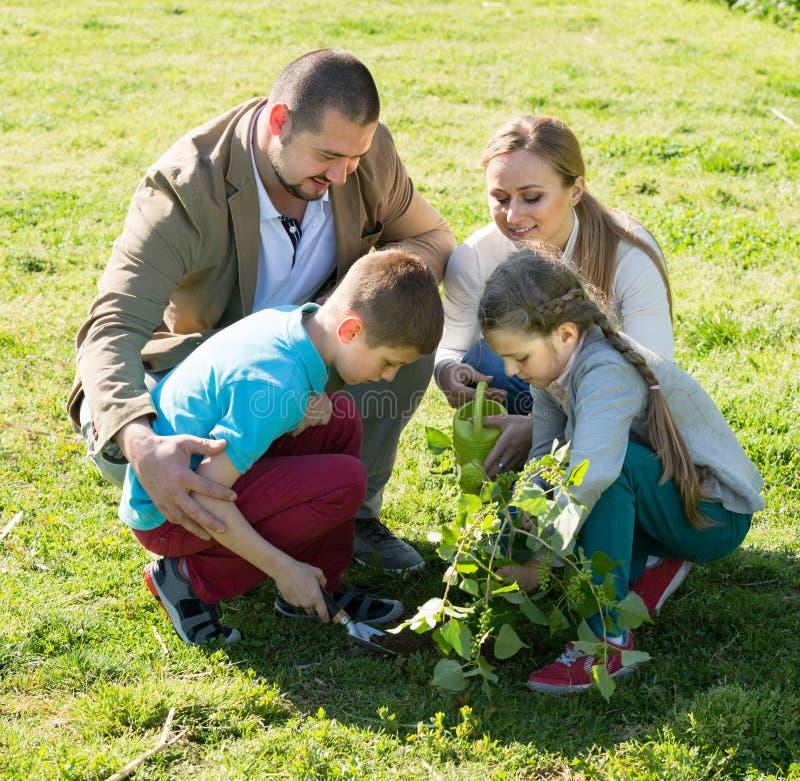 Famiglia che pianta albero all'aperto fotografia stock libera da diritti