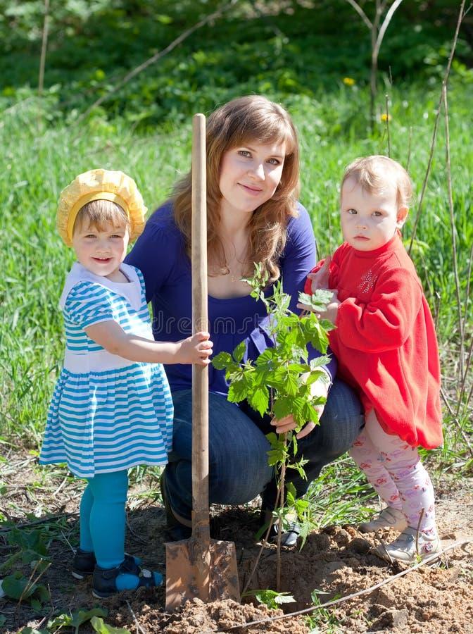 Famiglia che pianta i germogli immagine stock
