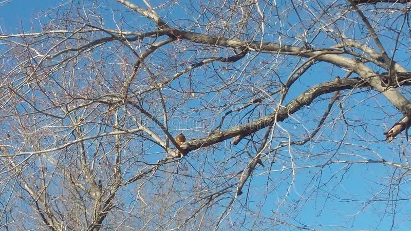 Famiglia degli scoiattoli fotografia stock libera da diritti