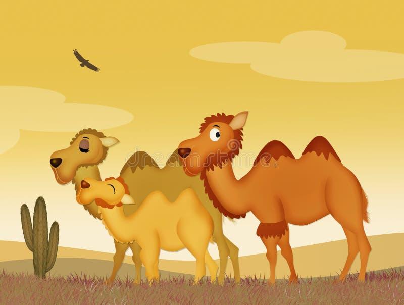 Famiglia dei cammelli illustrazione di stock