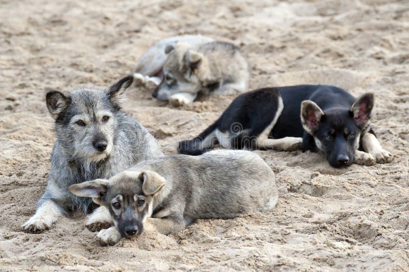 Famiglia dei cani esterni fotografia stock