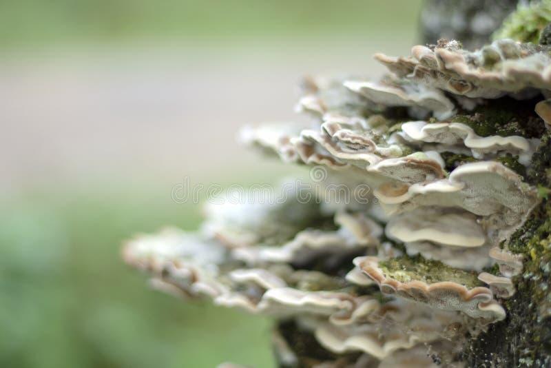 Famiglia dei funghi, fondo, struttura, primo piano Fuoco selettivo fotografia stock