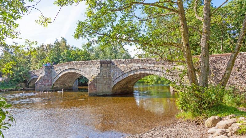 Famiglia del cigno del ponte di Pooley immagine stock