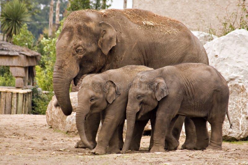 Famiglia dell'elefante fotografie stock libere da diritti