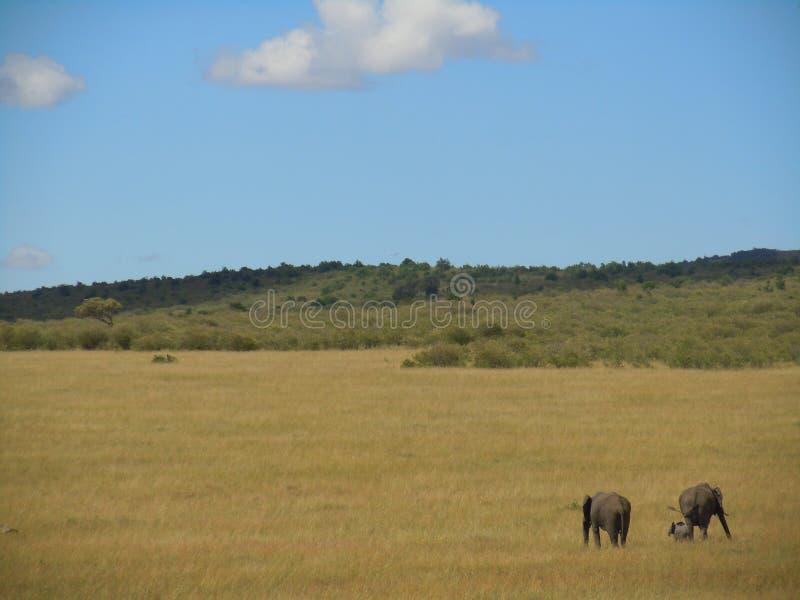 Famiglia dell'elefante sul safari keniano immagine stock