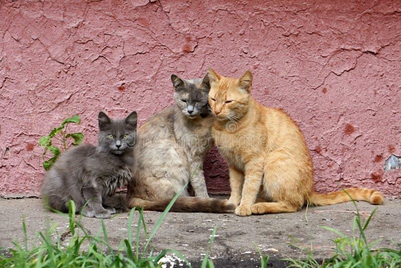 Famiglia di gatti della città, RUSSIA/Moscow immagine stock libera da diritti