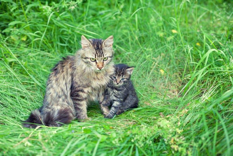 Famiglia di gatto immagine stock