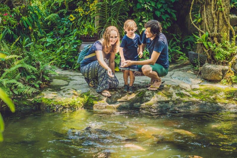 Famiglia felice che alimenta pesce gatto variopinto in stagno tropicale fotografia stock