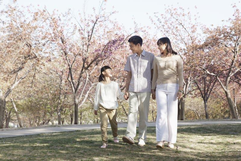 Famiglia felice che fa una passeggiata fra i ciliegi in un parco nella primavera, Pechino immagini stock