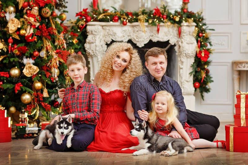 Famiglia nel rosso con i cuccioli del husky che si siedono sul Natale indietro fotografia stock