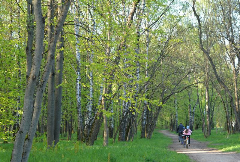 Famiglia sull'bici nel parco immagini stock libere da diritti