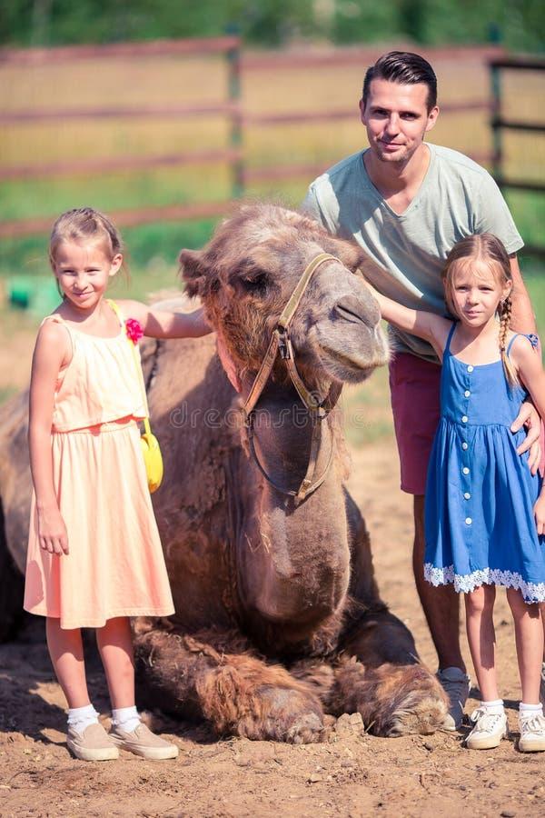 Familia con los camellos en el parque zoológico en día de verano caliente y soleado Ocio activo de la familia imagenes de archivo