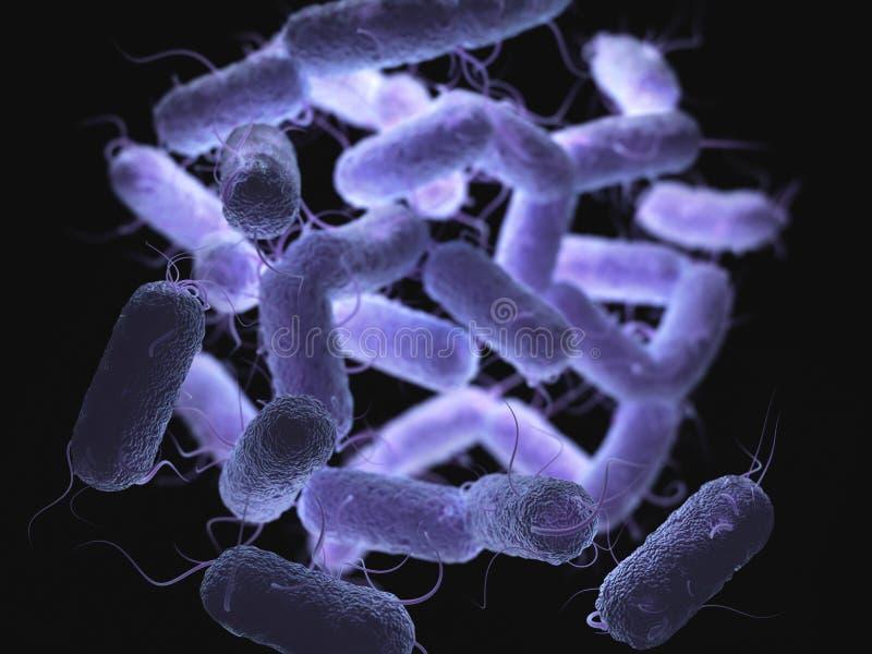 Familia de bacterias de las enterobacteriáceas ilustración del vector