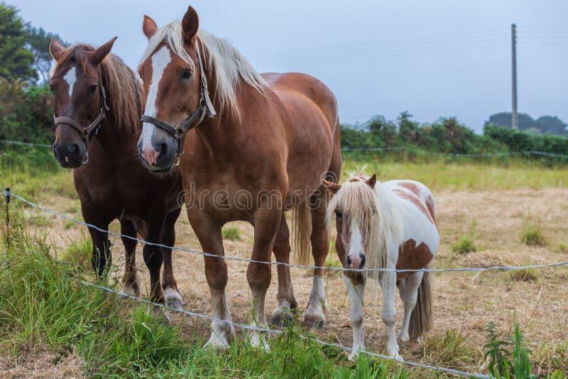 Familia de caballos hermosos del árbol foto de archivo