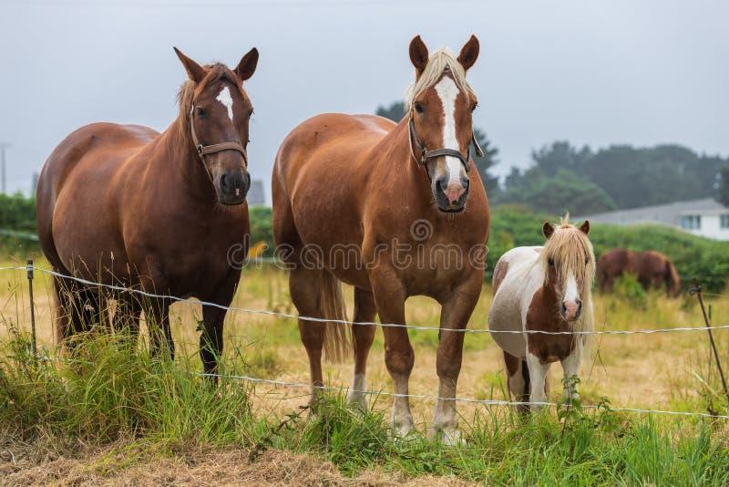Familia de caballos hermosos del árbol imagenes de archivo