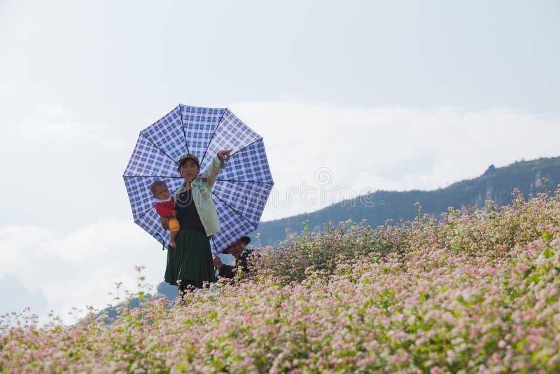 Familia de la minoría de Hmong del vietnamita que toma un resto en la flor púrpura fotografía de archivo