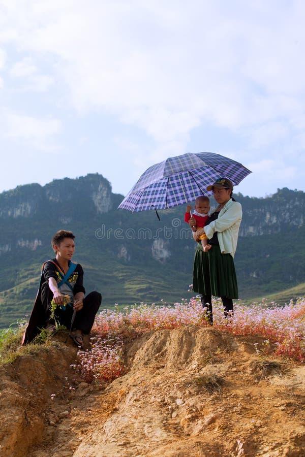 Familia de la minoría de Hmong del vietnamita que toma un resto en la flor púrpura imagen de archivo libre de regalías