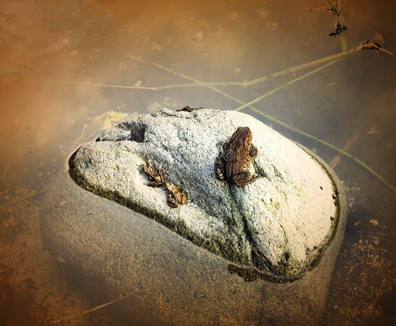 Familia de la rana imagenes de archivo