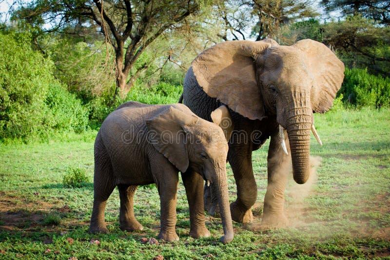Familia de los elefantes fotografía de archivo libre de regalías