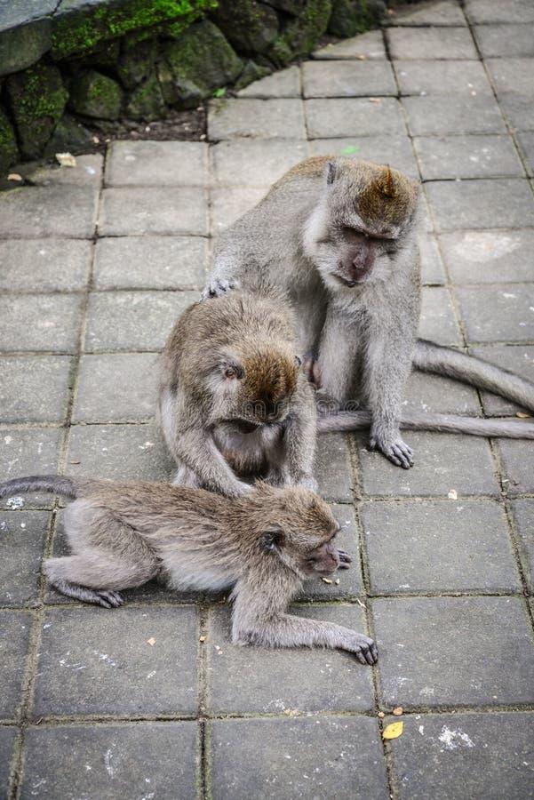 Familia de monos imágenes de archivo libres de regalías