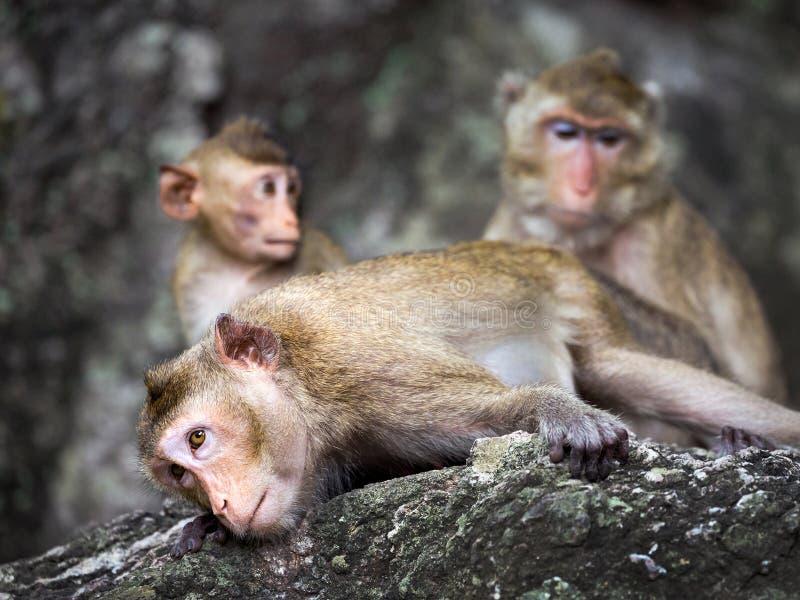 Familia de monos en el bosque foto de archivo libre de regalías
