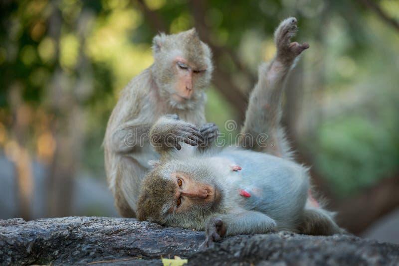 Familia de monos en el salvaje foto de archivo libre de regalías