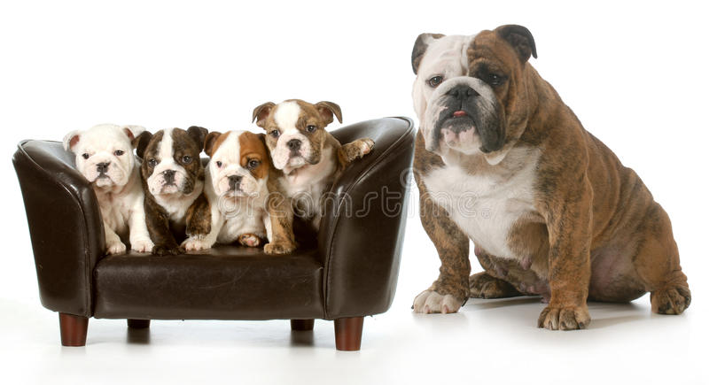 Familia de perro fotos de archivo