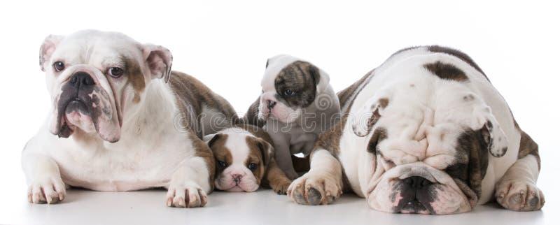 familia de perro con los perritos imagen de archivo