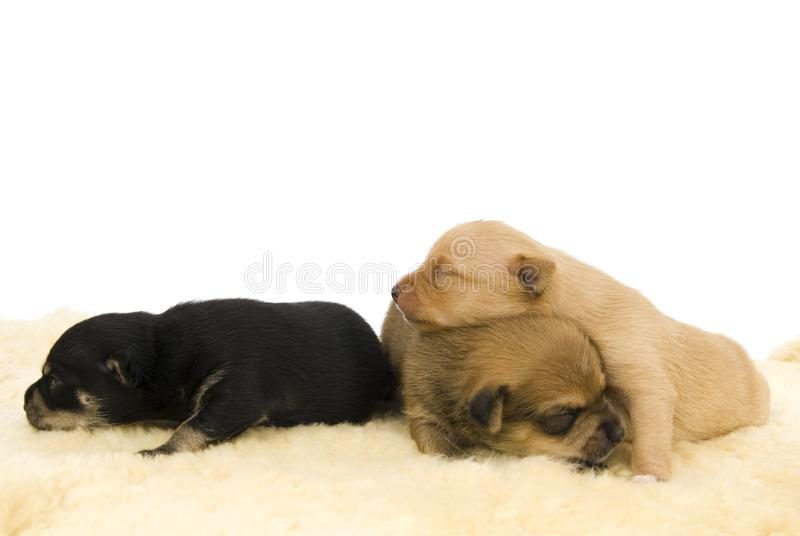 Familia de perros. fotos de archivo libres de regalías