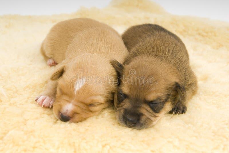 Familia de perros. imagen de archivo