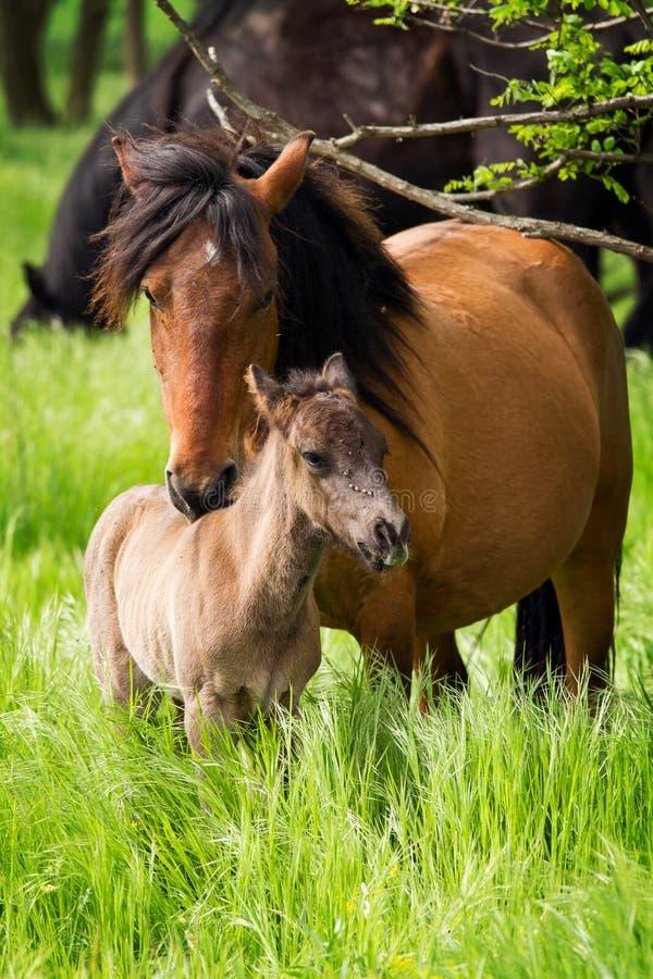 Familia del caballo foto de archivo libre de regalías