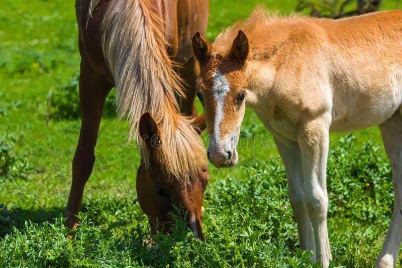 Familia del caballo imagenes de archivo