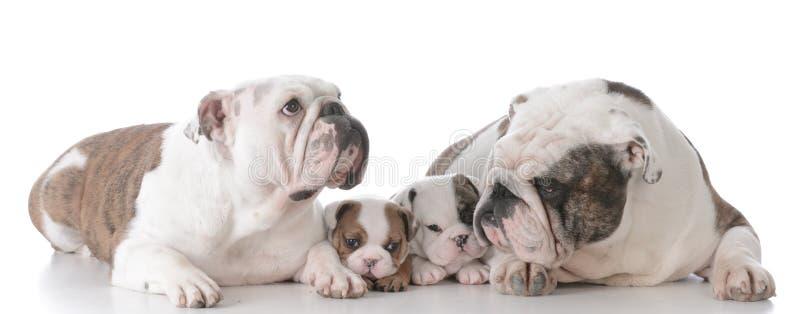 familia del dogo con los perritos imagenes de archivo