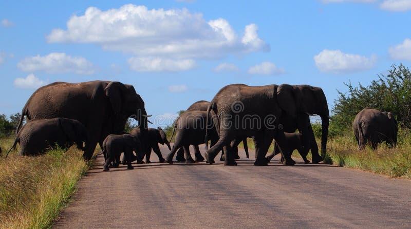 Familia del elefante que cruza el camino imagenes de archivo
