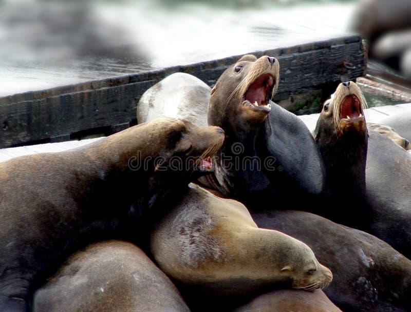 Familia Del León De Mar Imagenes de archivo
