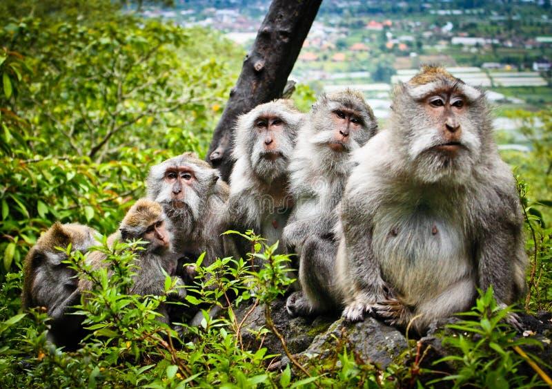 Familia del mono fotografía de archivo