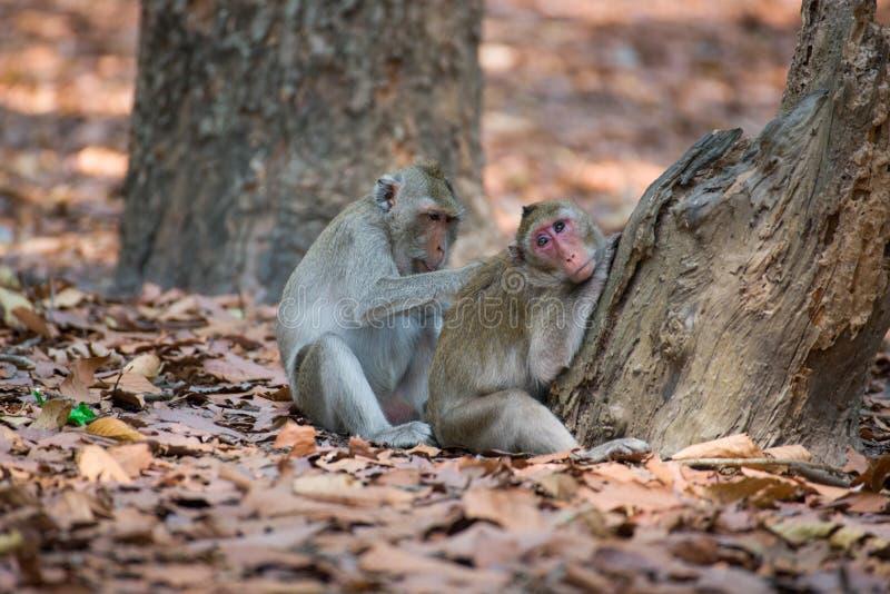 Familia del mono que se relaja en Tailandia fotografía de archivo libre de regalías