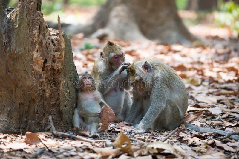 Familia del mono que se relaja en Tailandia imagen de archivo libre de regalías