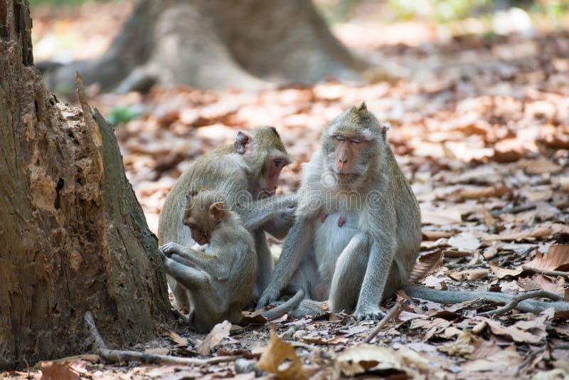 Familia del mono que se relaja en Tailandia foto de archivo