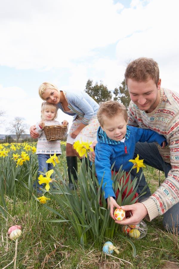 Familia en caza del huevo de Pascua en campo del narciso imagen de archivo