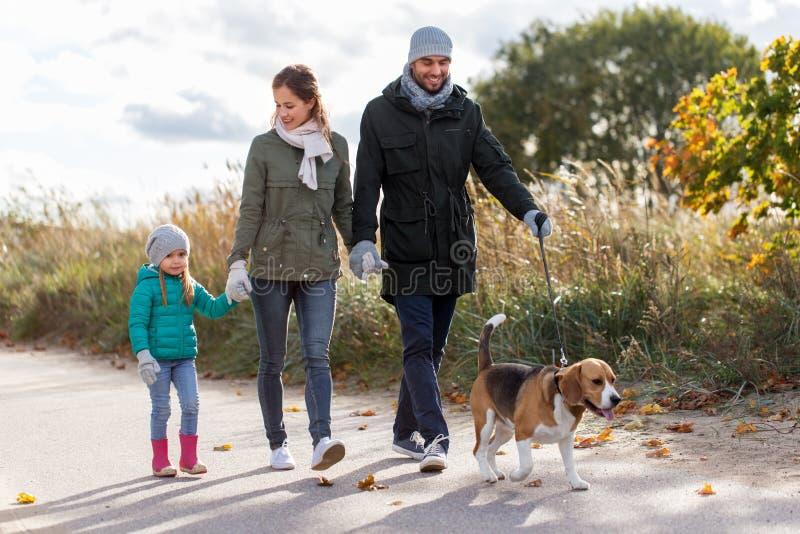 Familia feliz que camina con el perro del beagle en otoño imagen de archivo