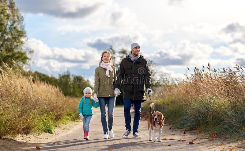 Familia feliz que camina con el perro del beagle en oto?o fotos de archivo