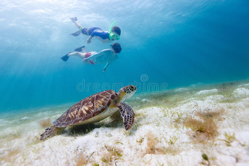 Familia que bucea con la tortuga de mar imagen de archivo libre de regalías