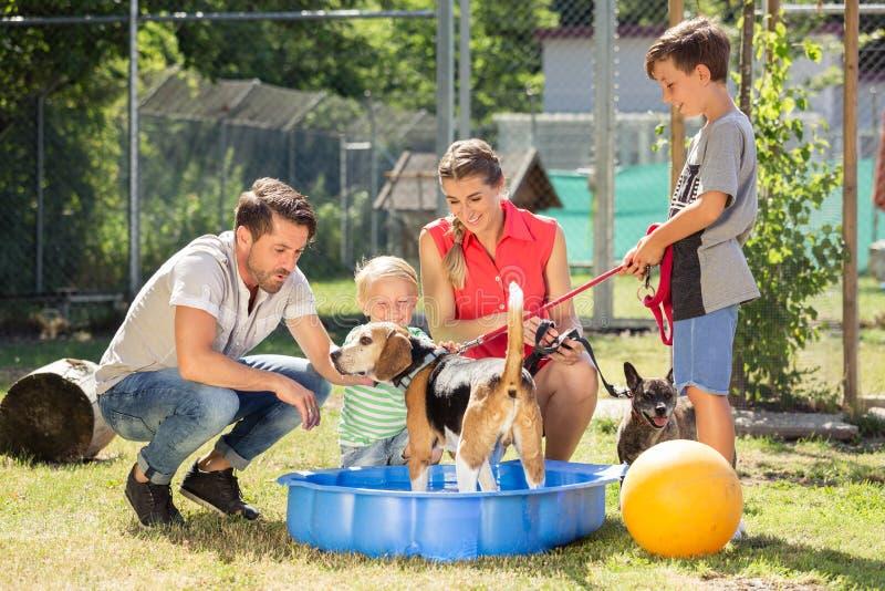 Familia que juega con el perro del refugio para animales imagenes de archivo