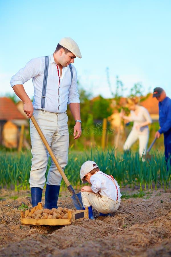 Familia que planta las patatas en huerto imagenes de archivo